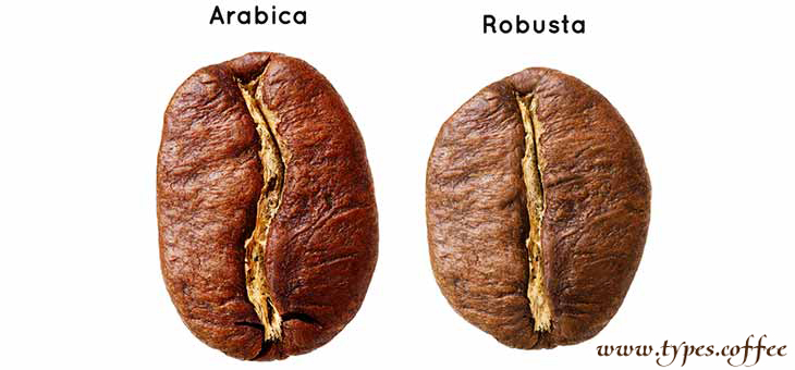 coffee beans robusta vs arabica There is one coffee bean which is considered the queen of beans: it dominates the world's coffee production and rules the specialty market  arabica vs robusta,.